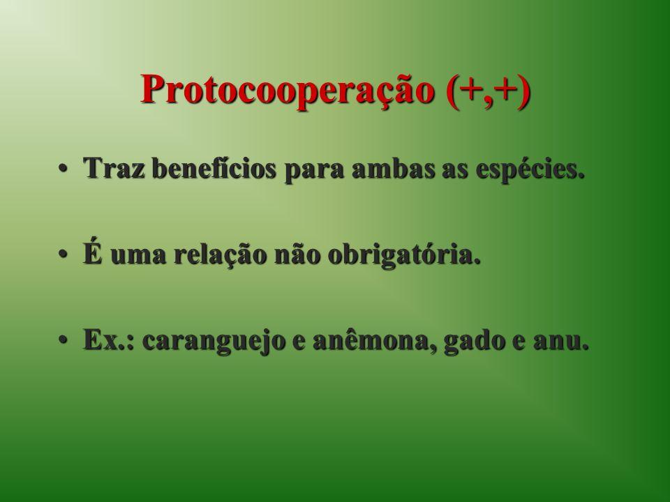 Protocooperação (+,+) Traz benefícios para ambas as espécies.