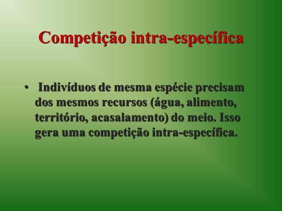 Competição intra-específica