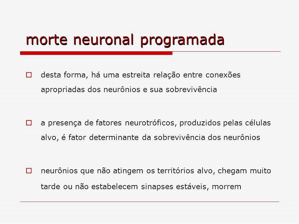 morte neuronal programada