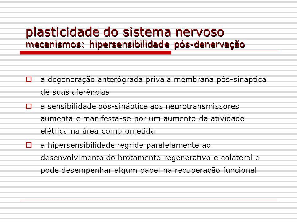 plasticidade do sistema nervoso mecanismos: hipersensibilidade pós-denervação