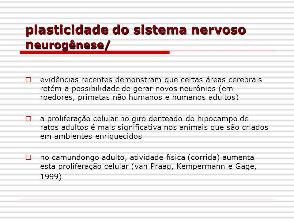 plasticidade do sistema nervoso neurogênese/