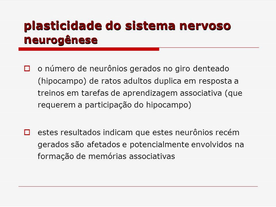 plasticidade do sistema nervoso neurogênese