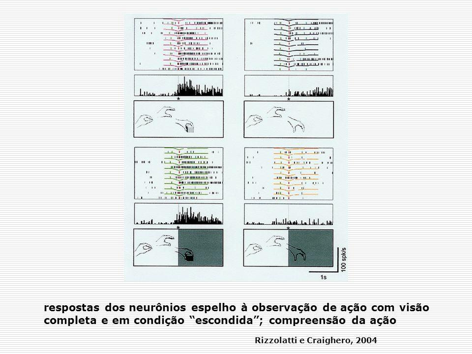 respostas dos neurônios espelho à observação de ação com visão