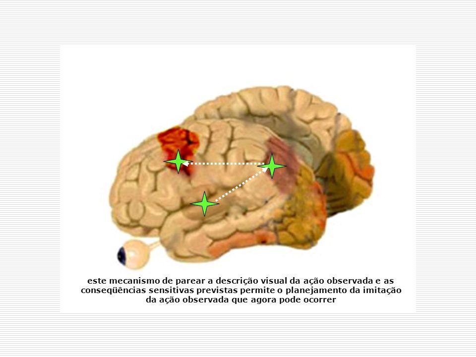 este mecanismo de parear a descrição visual da ação observada e as