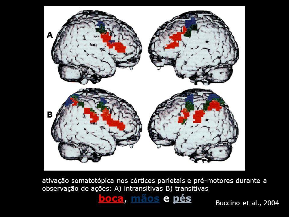 A B. ativação somatotópica nos córtices parietais e pré-motores durante a. observação de ações: A) intransitivas B) transitivas.