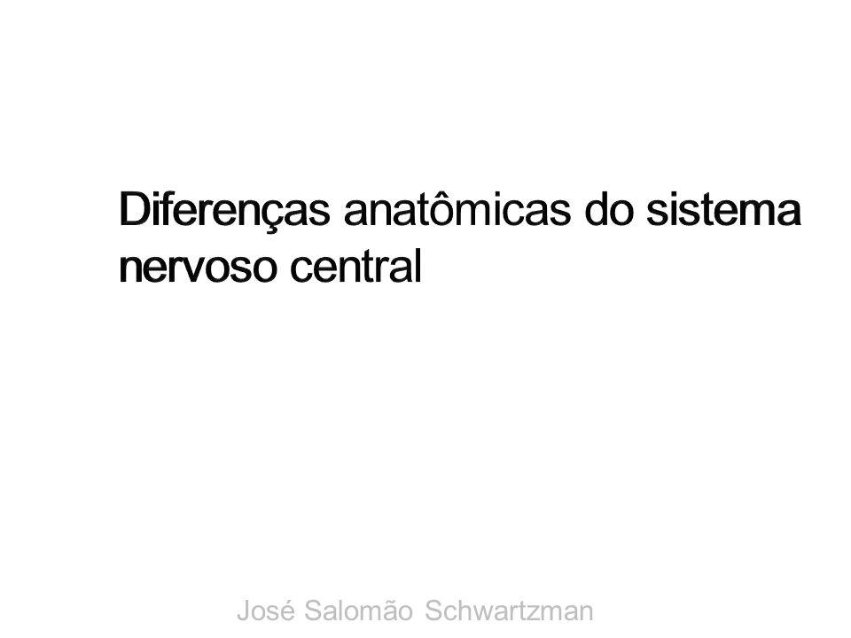 Diferenças anatômicas do sistema nervoso central
