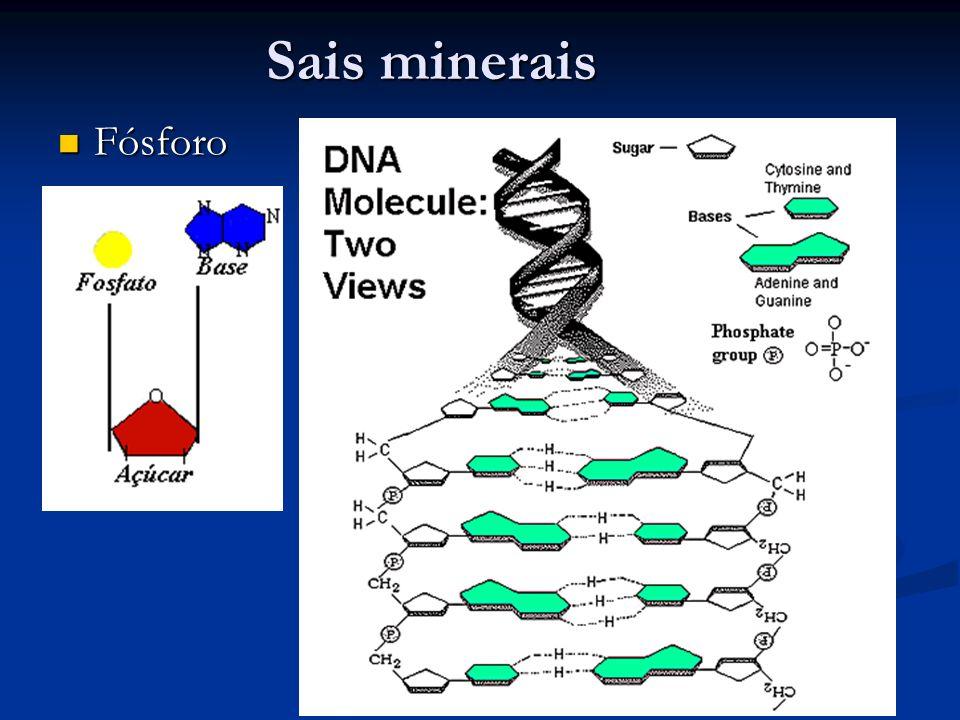 Sais minerais Fósforo