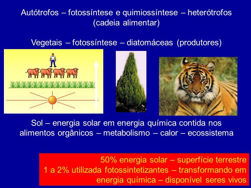 Autótrofos – fotossíntese e quimiossíntese – heterótrofos