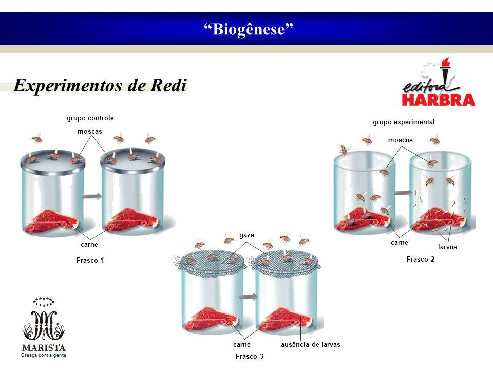 Experimentos de Redi Biogênese grupo controle grupo experimental