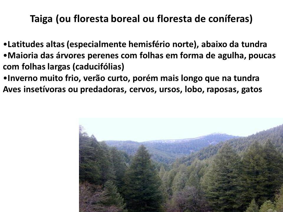 Taiga (ou floresta boreal ou floresta de coníferas)