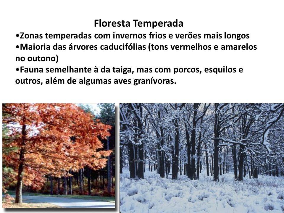 Floresta Temperada Zonas temperadas com invernos frios e verões mais longos. Maioria das árvores caducifólias (tons vermelhos e amarelos no outono)