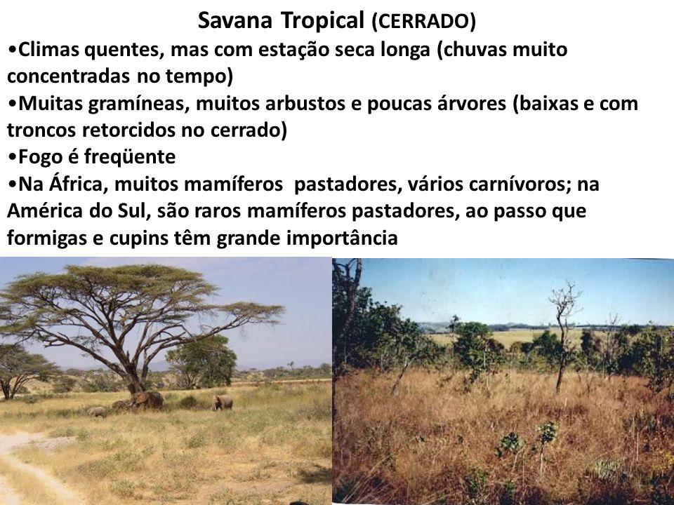 Savana Tropical (CERRADO)
