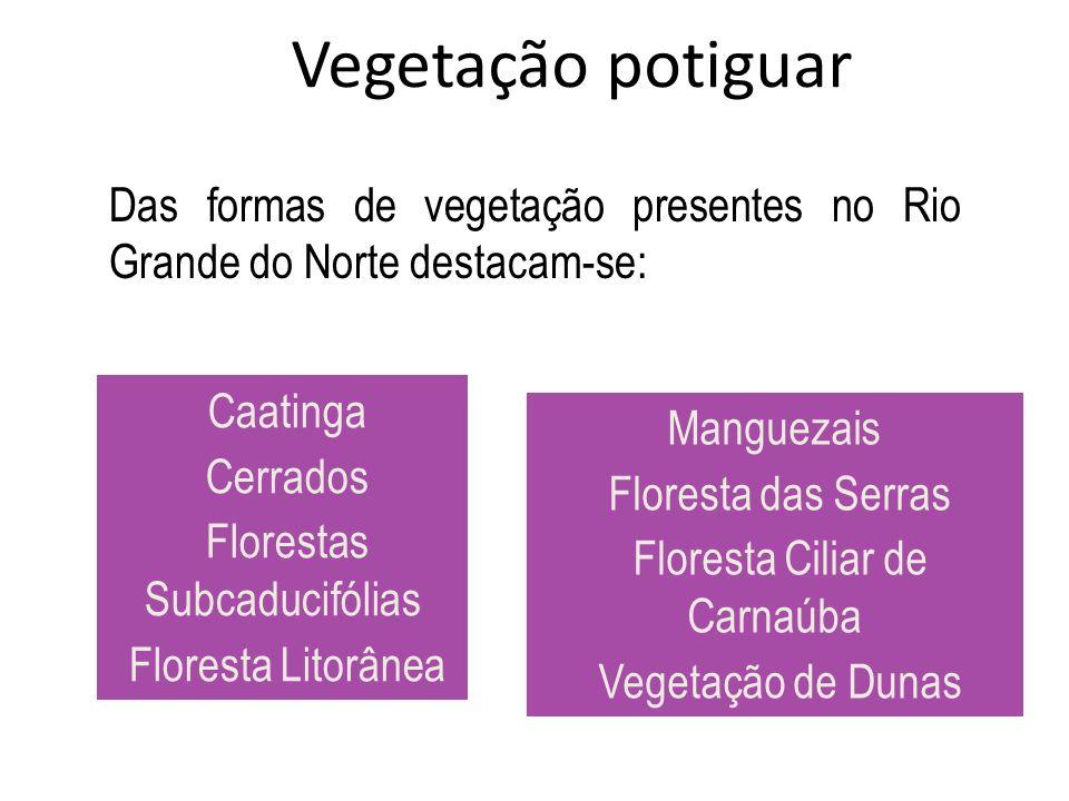 Vegetação potiguar Das formas de vegetação presentes no Rio Grande do Norte destacam-se: Caatinga.
