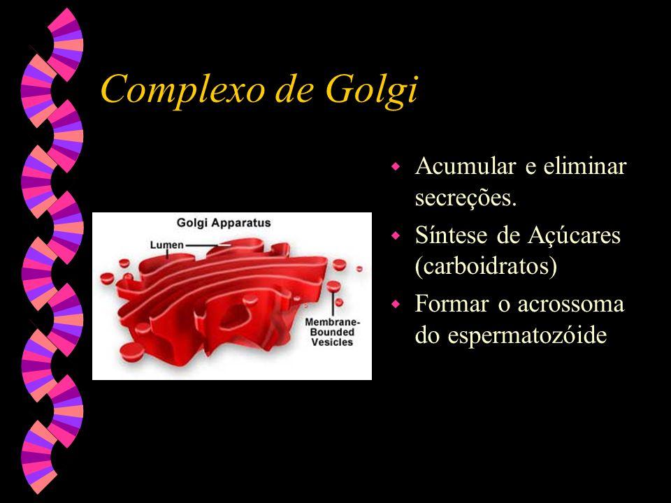 Complexo de Golgi Acumular e eliminar secreções.