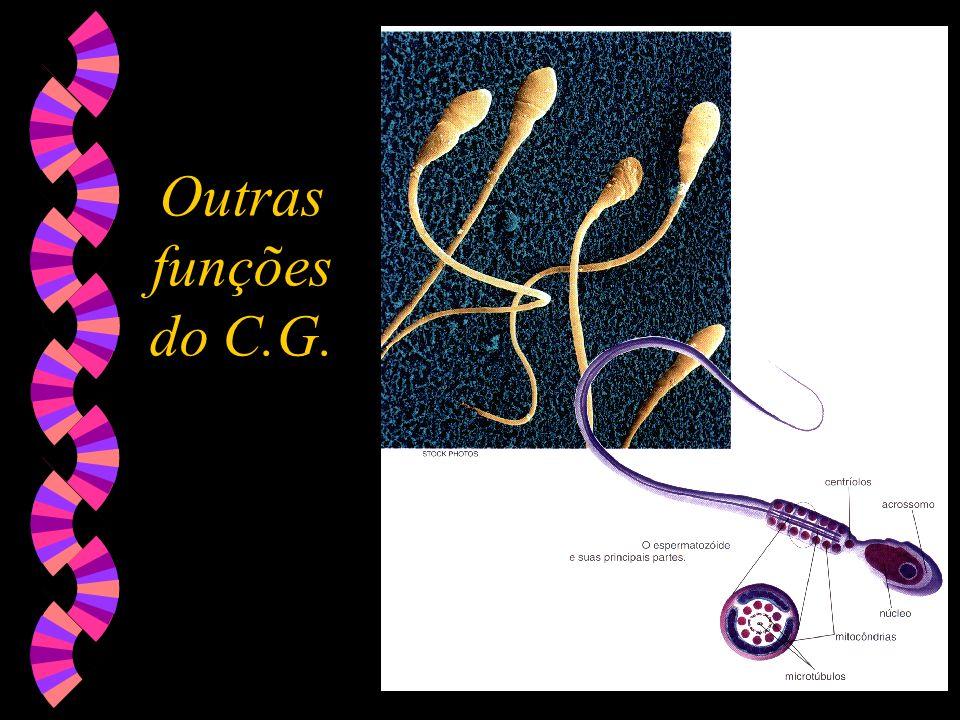 Outras funções do C.G.