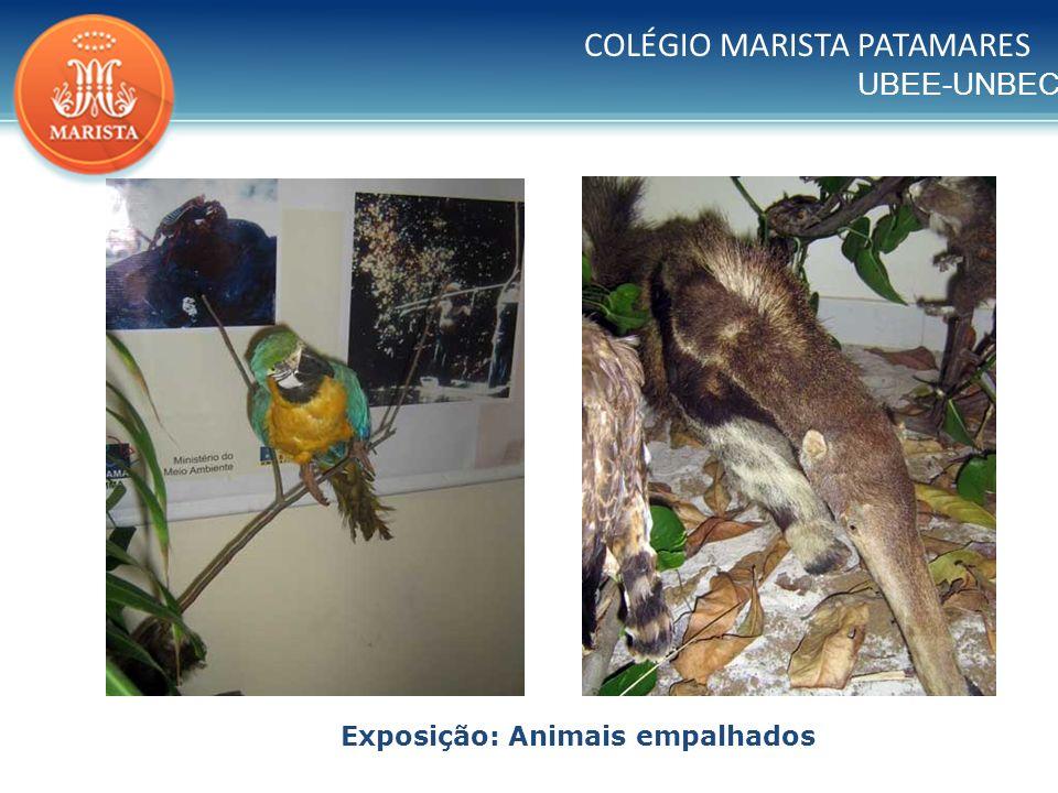 Exposição: Animais empalhados