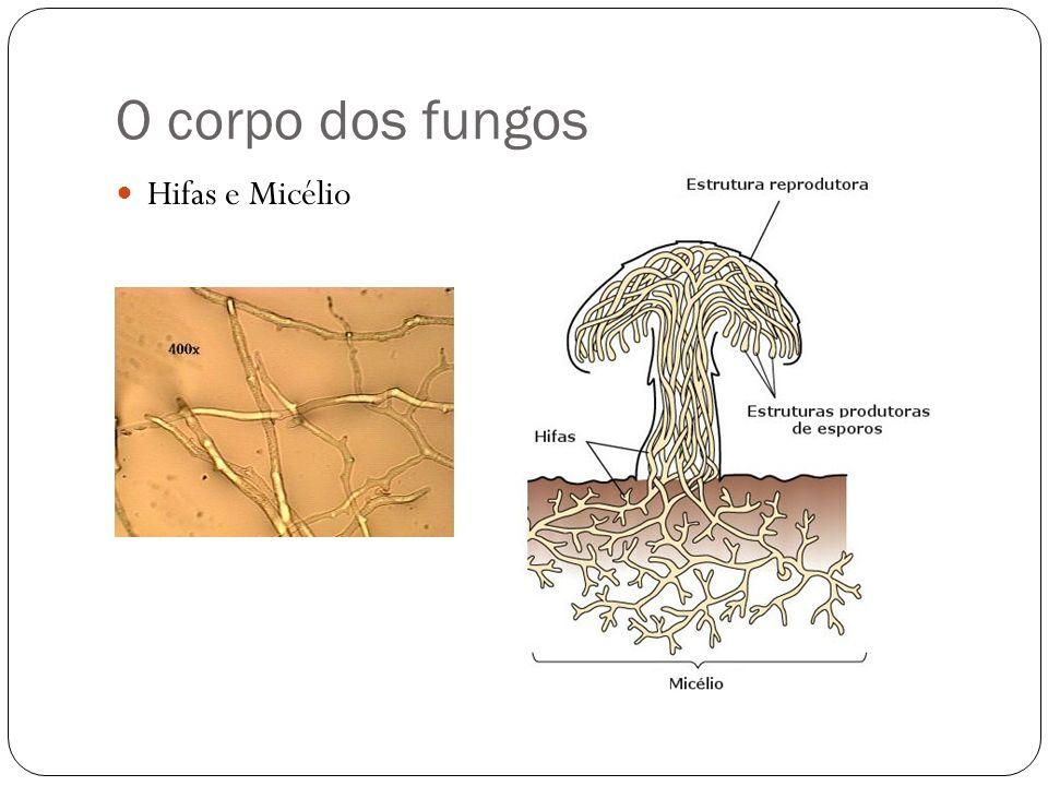 O corpo dos fungos Hifas e Micélio
