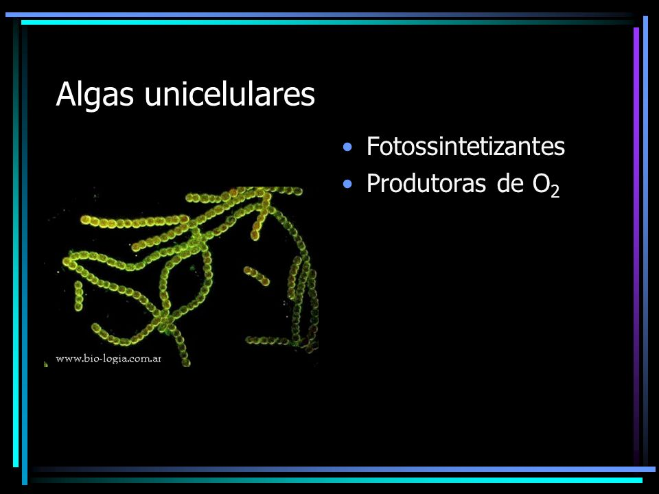 Algas unicelulares Fotossintetizantes Produtoras de O2
