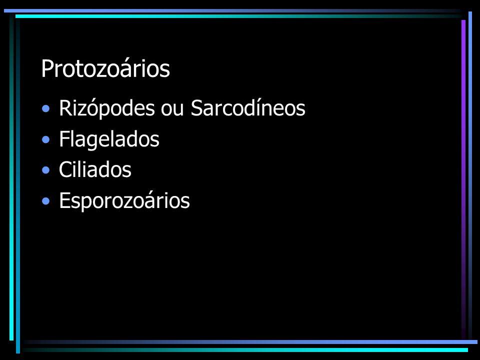 Protozoários Rizópodes ou Sarcodíneos Flagelados Ciliados