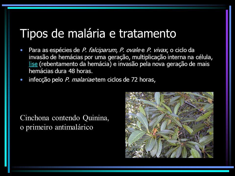 Tipos de malária e tratamento
