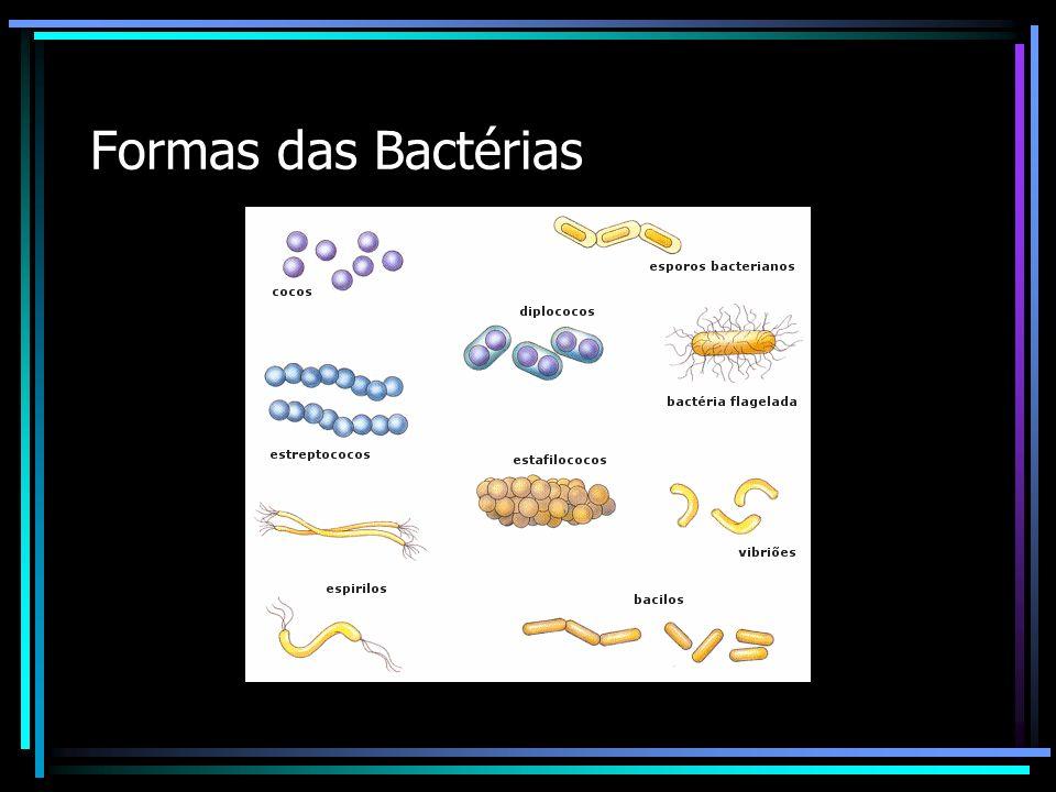 Formas das Bactérias