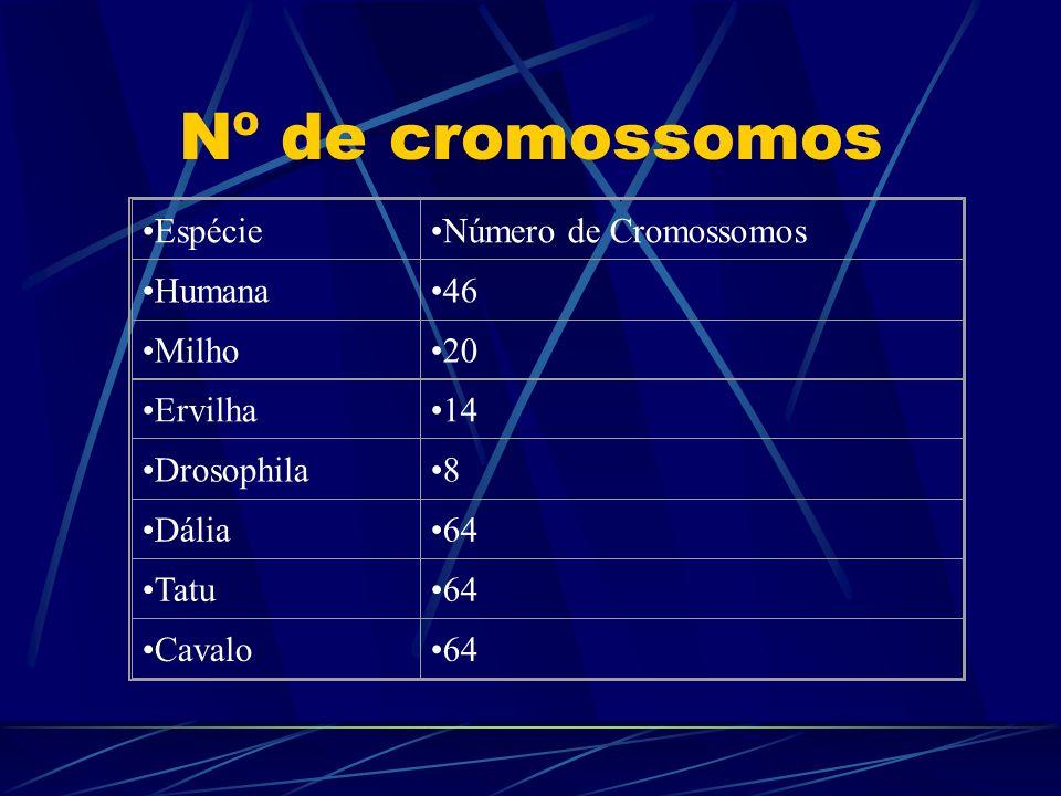 Nº de cromossomos Espécie Número de Cromossomos Humana 46 Milho 20