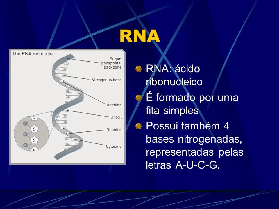 RNA RNA: ácido ribonucleico É formado por uma fita simples