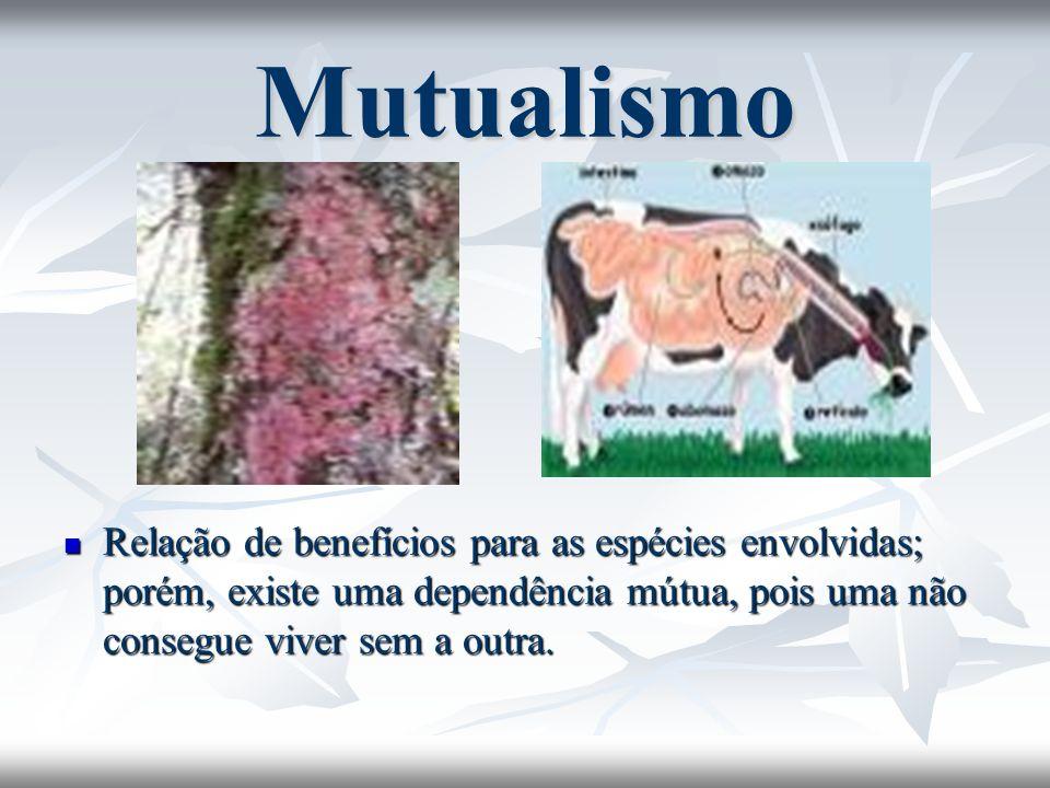 MutualismoRelação de benefícios para as espécies envolvidas; porém, existe uma dependência mútua, pois uma não consegue viver sem a outra.