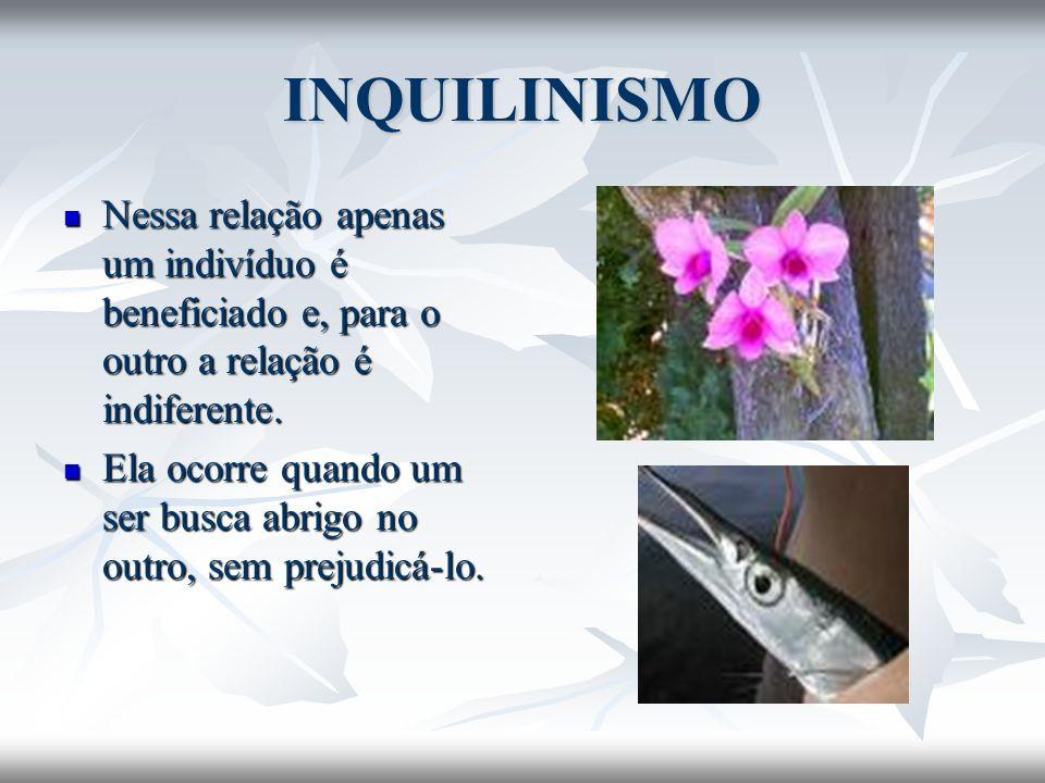 INQUILINISMO Nessa relação apenas um indivíduo é beneficiado e, para o outro a relação é indiferente.