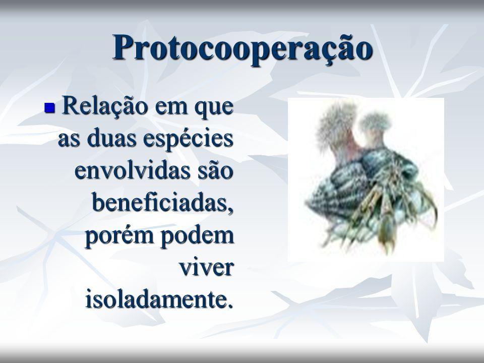 Protocooperação Relação em que as duas espécies envolvidas são beneficiadas, porém podem viver isoladamente.