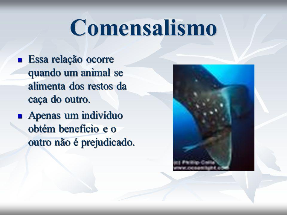 ComensalismoEssa relação ocorre quando um animal se alimenta dos restos da caça do outro.