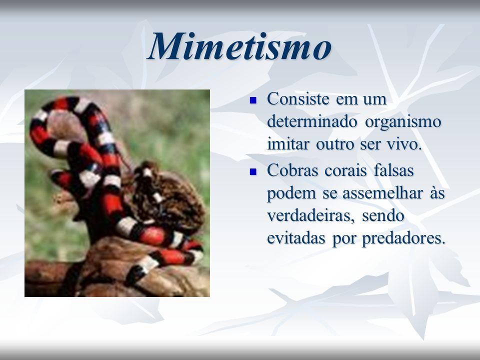 Mimetismo Consiste em um determinado organismo imitar outro ser vivo.