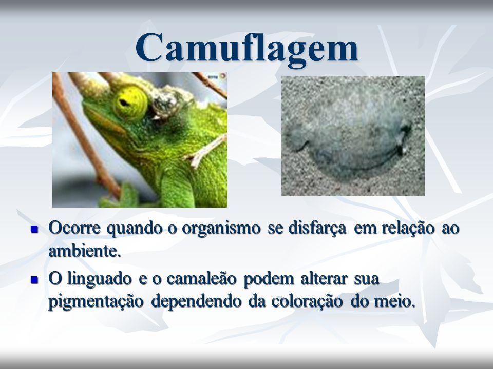 Camuflagem Ocorre quando o organismo se disfarça em relação ao ambiente.