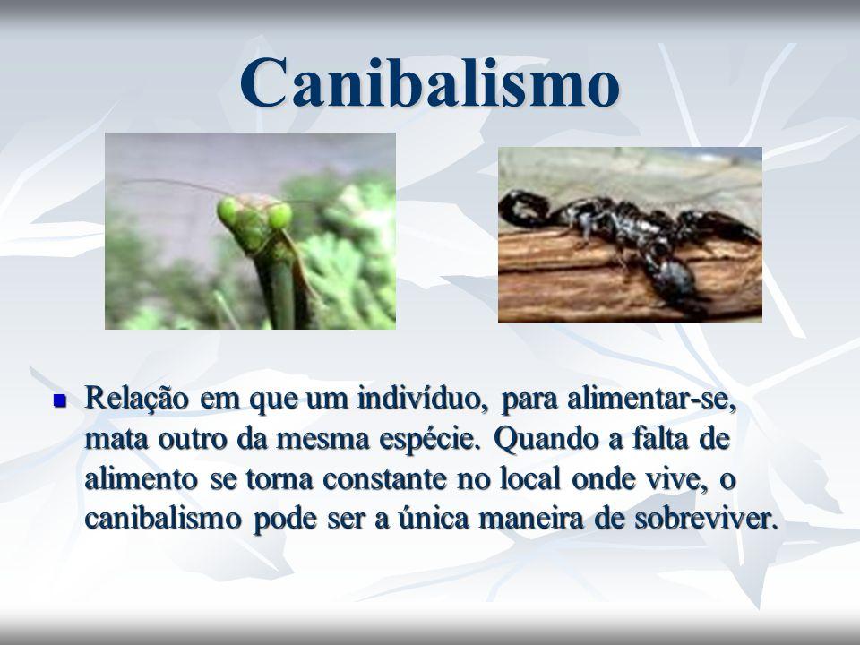 Canibalismo