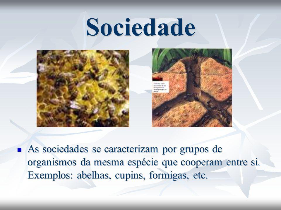SociedadeAs sociedades se caracterizam por grupos de organismos da mesma espécie que cooperam entre si.