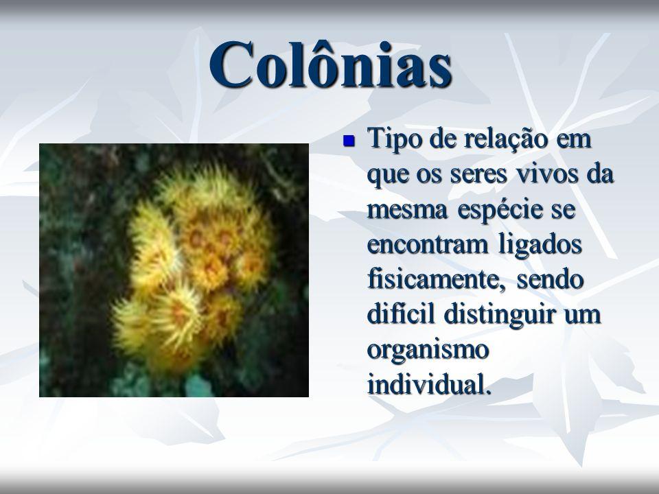 Colônias Tipo de relação em que os seres vivos da mesma espécie se encontram ligados fisicamente, sendo difícil distinguir um organismo individual.