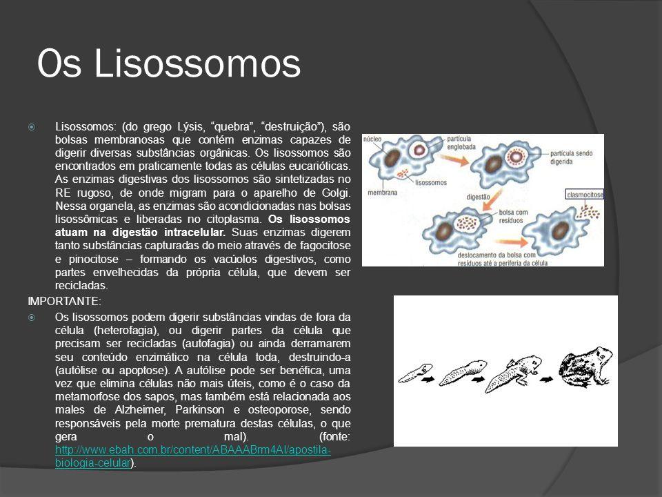 Os Lisossomos