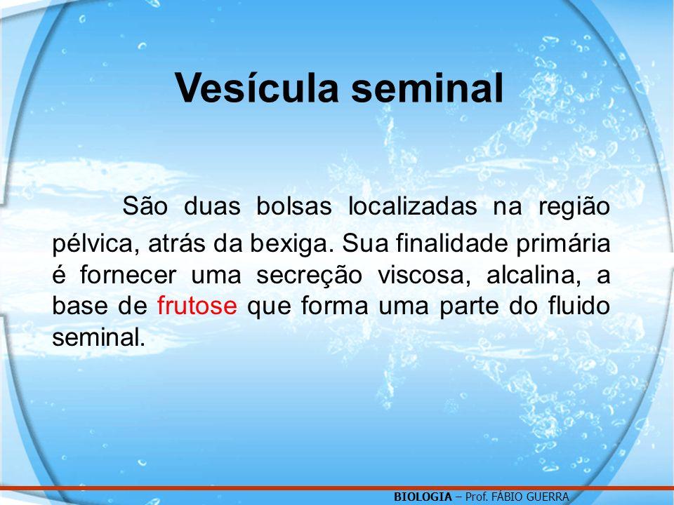 Vesícula seminal