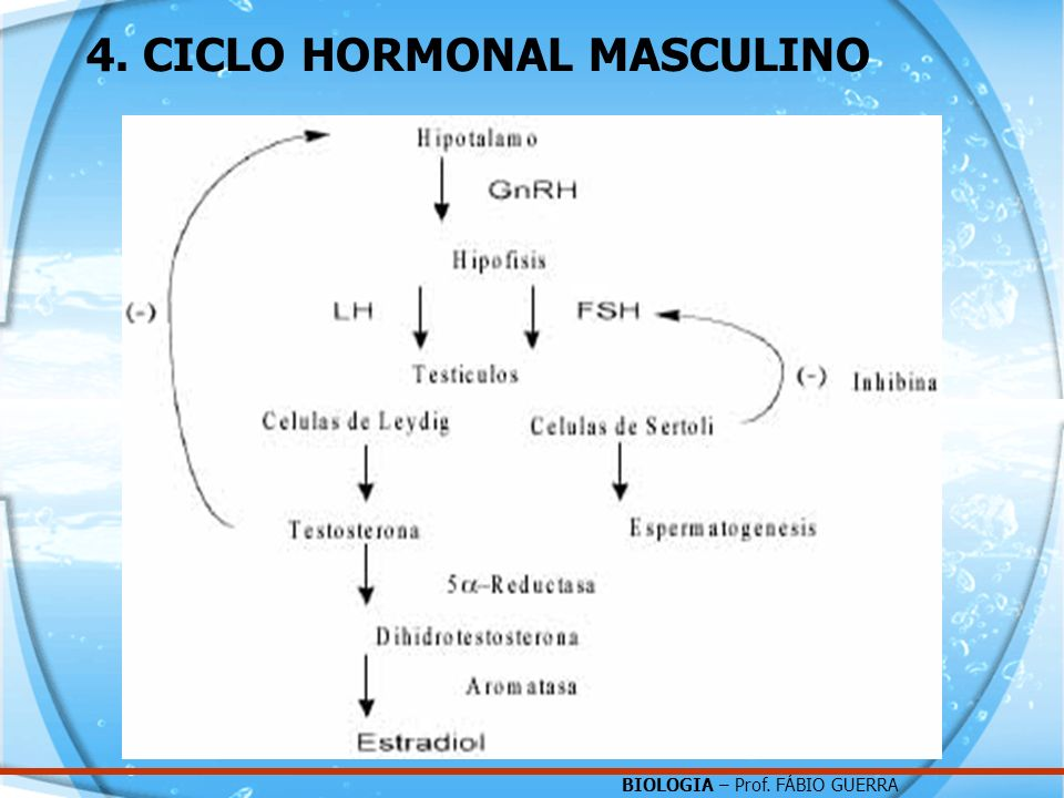 4. CICLO HORMONAL MASCULINO