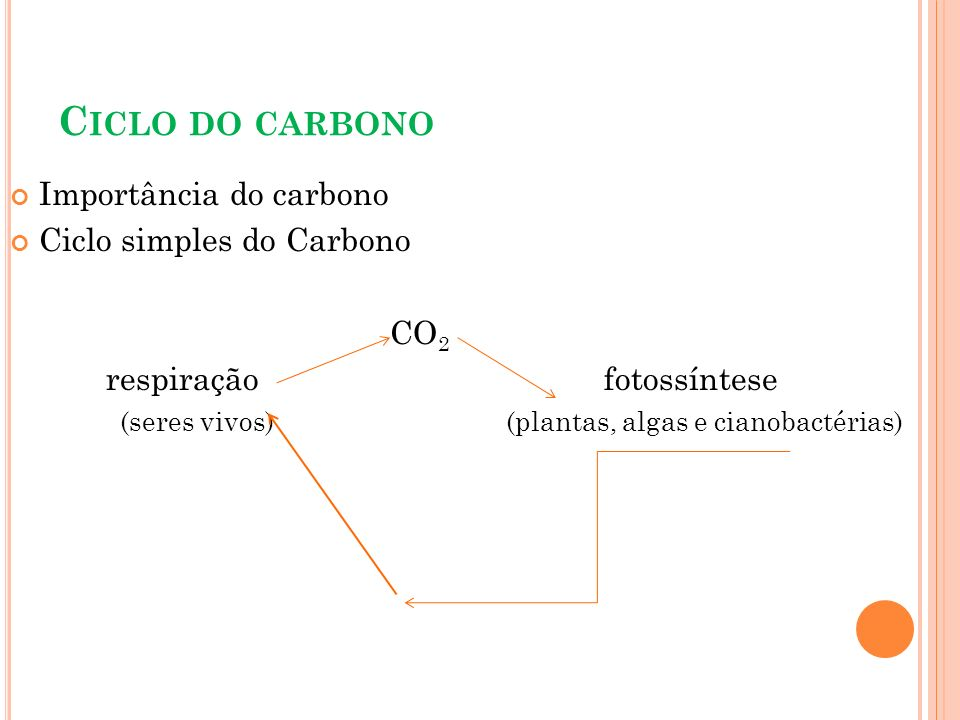 Ciclo do carbono Importância do carbono Ciclo simples do Carbono CO2
