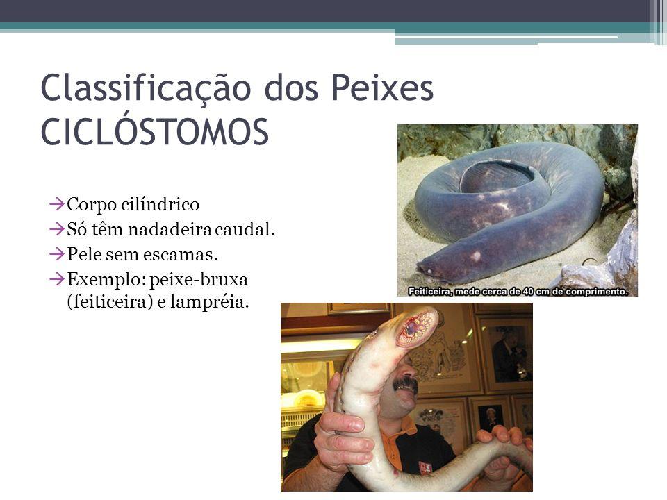 Classificação dos Peixes CICLÓSTOMOS