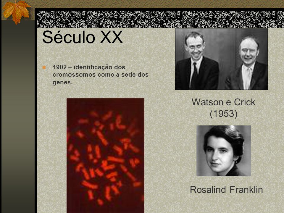 Século XX Watson e Crick (1953) Rosalind Franklin