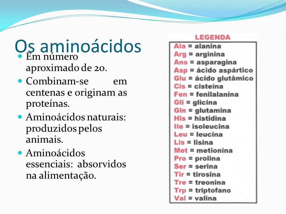 Os aminoácidos Em número aproximado de 20.