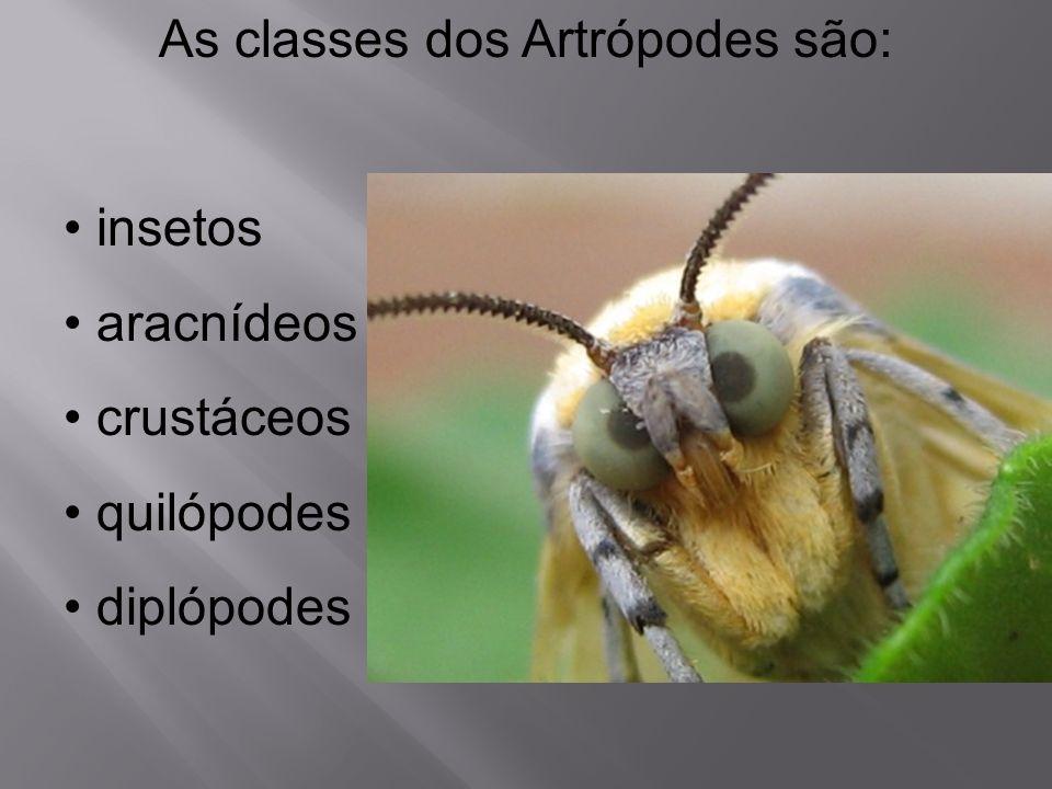 As classes dos Artrópodes são: