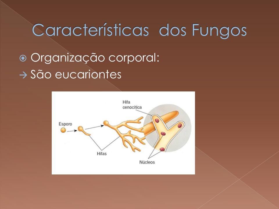 Características dos Fungos