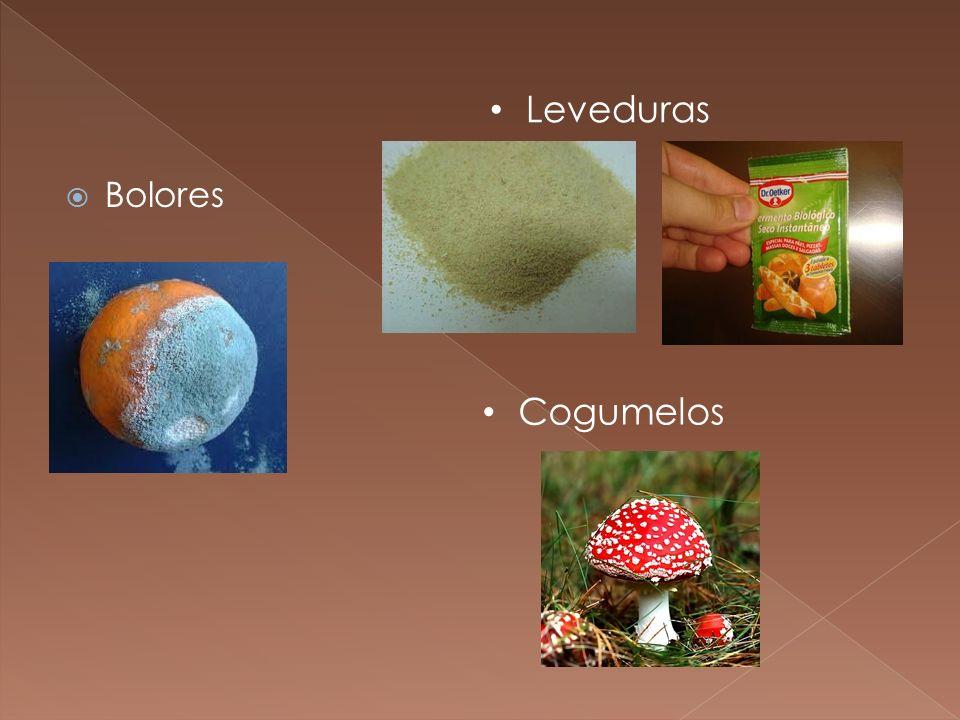 Leveduras Bolores Cogumelos