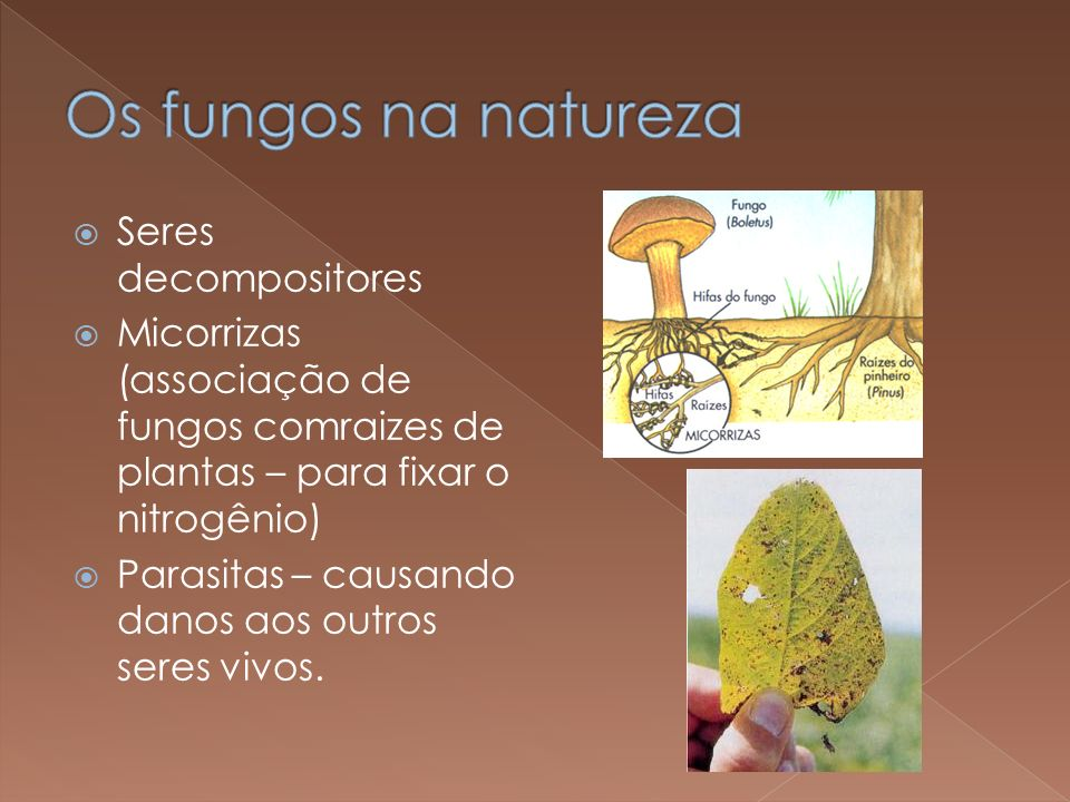 Os fungos na natureza Seres decompositores
