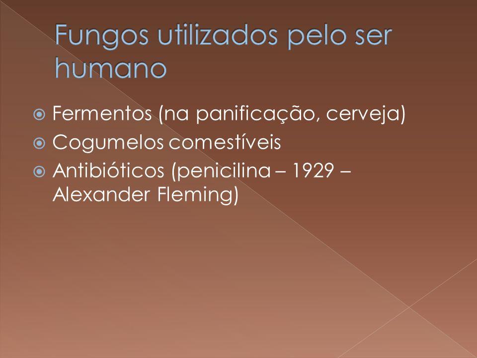 Fungos utilizados pelo ser humano