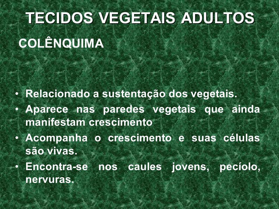 TECIDOS VEGETAIS ADULTOS