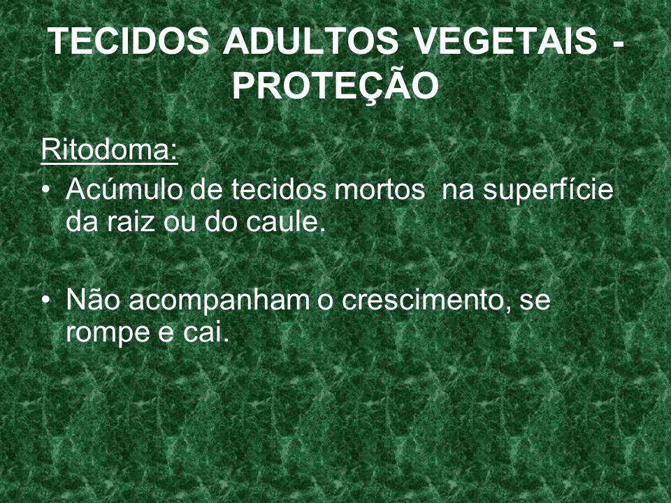 TECIDOS ADULTOS VEGETAIS - PROTEÇÃO